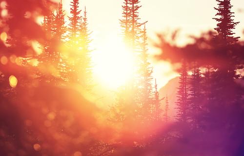 Sunlight through a forest in winter